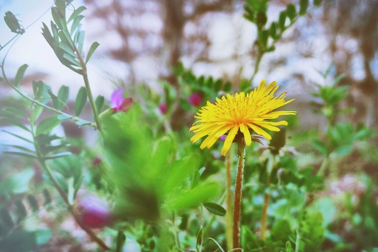 Flower Nature Beauty In Nature Yellow First Eyeem Photo