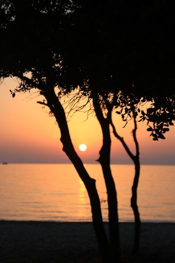 Sunset Silhouette Water Sky Scenics - Nature Beauty In Nature Tranquility Tree Sunset Tranquil Scene Sea Nature Plant Idyllic Orange Color Horizon Over Water Horizon Beach Land No People Outdoors