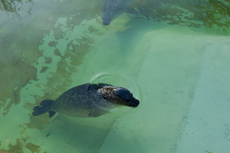 High angle view of turtle swimming in water