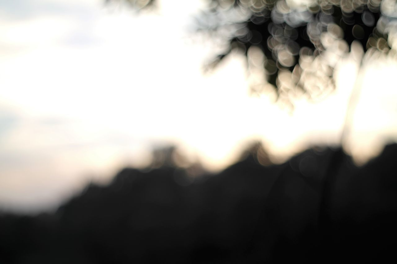 CLOSE-UP OF SILHOUETTE AGAINST SKY