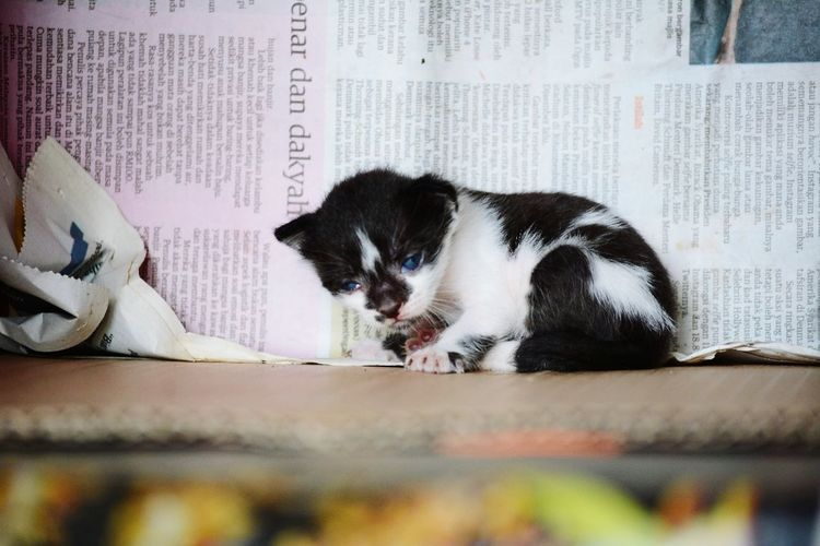 Pets Indoors  Domestic Cat Domestic Animals One Animal Animal Themes No People Day Mammal Close-up Kitten Black And White In Box Newspaper Cat Newborn 2 Weeks Old