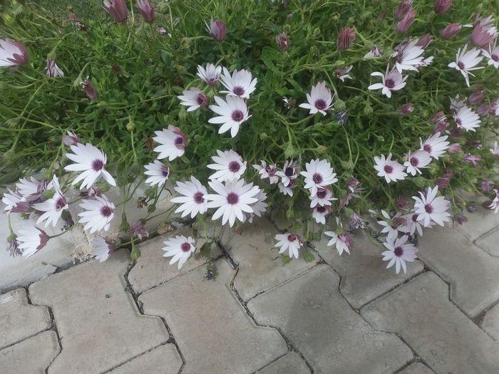 Flower High
