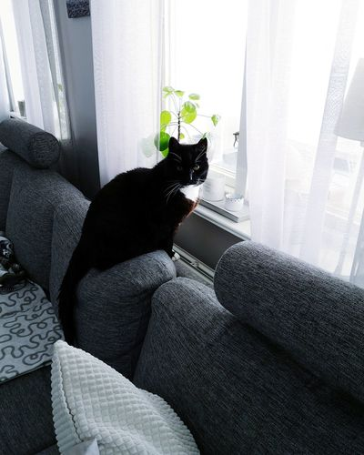 Cat sitting on sofa at home
