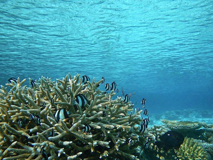 Underwater Underwaterphotography Fish Climatechange Traveling Travel Photography SaveMarineSpecies Stopoverfishing Savesharks