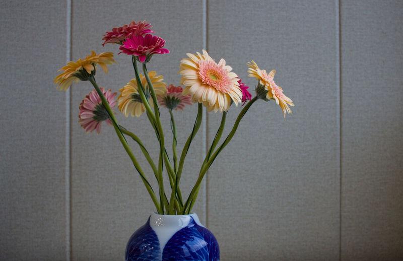 Flower Flowering Plant Plant Vulnerability  Freshness Nature Fragility Close-up Flower Arrangement Beauty In Nature Vase Indoors  Flower Head Low Section Petal Bouquet Plant Stem
