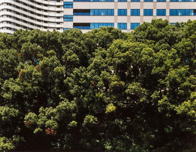 Trees growing in city against sky