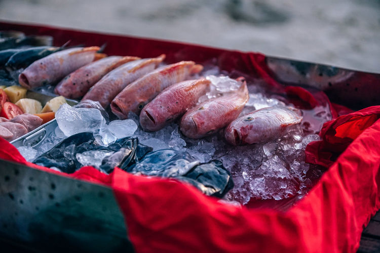 Freshly caught fish is placed on the ice cubes to cool the fish. Fish placed on the red cloth of the seller cart. Catch Diet Nature Raw Seafood Animal Aquaculture Cart Close-up Day Fish Fishing Food Food And Drink Freshness High Angle View Indoors  Meat No People Preparation  Raw Food Red Selective Focus Tail Vertebrate