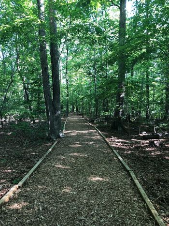 The trails is lined for you Plant Tree Green Color Growth No People Nature Day Park Foliage Footpath Scenics - Nature The Way Forward Lush Foliage Land Tranquil Scene Beauty In Nature Tranquility Outdoors Park - Man Made Space Direction