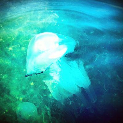 Sea Anapa Medusa анапа2014 hdr summer