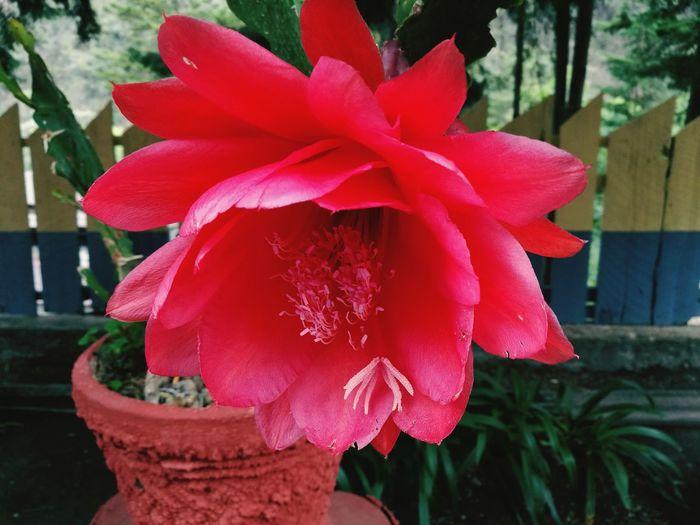 Flor.... Flower