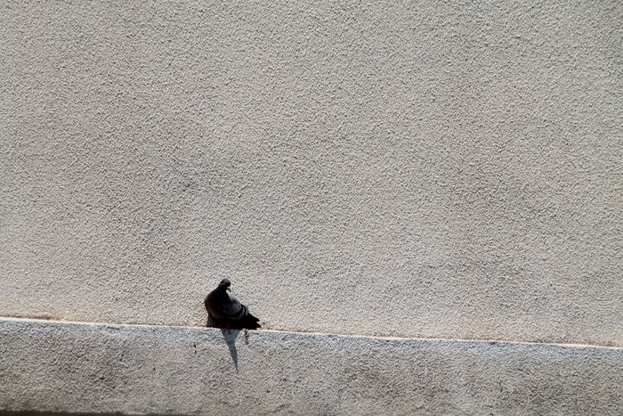 HDR Naturaleza Urbana Pajaro Valencia, Spain Architecture Bird Hd Photo Outdoors Paloma,