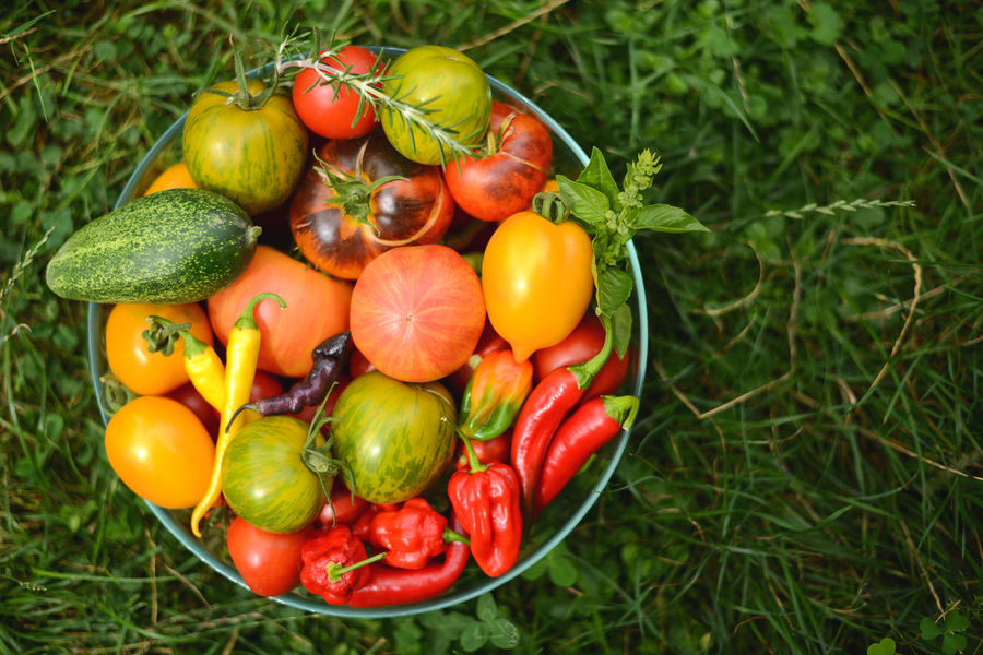 Colors Gardening Growth Home Goods Homegrown Produce Vegetables & Fruits Eat Food Garden Healthy Healthy Eating Healthy Lifestyle Home Vegetables Homegrown Homegrownvegetable Pepper Special Varieties Tasty Tomato Vegan Vegetable Vegetables Vegeterian
