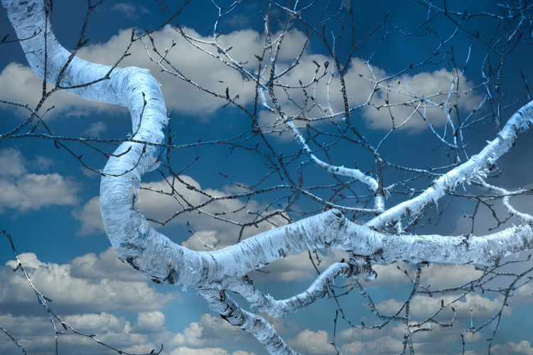 Close-up of frozen tree against sky