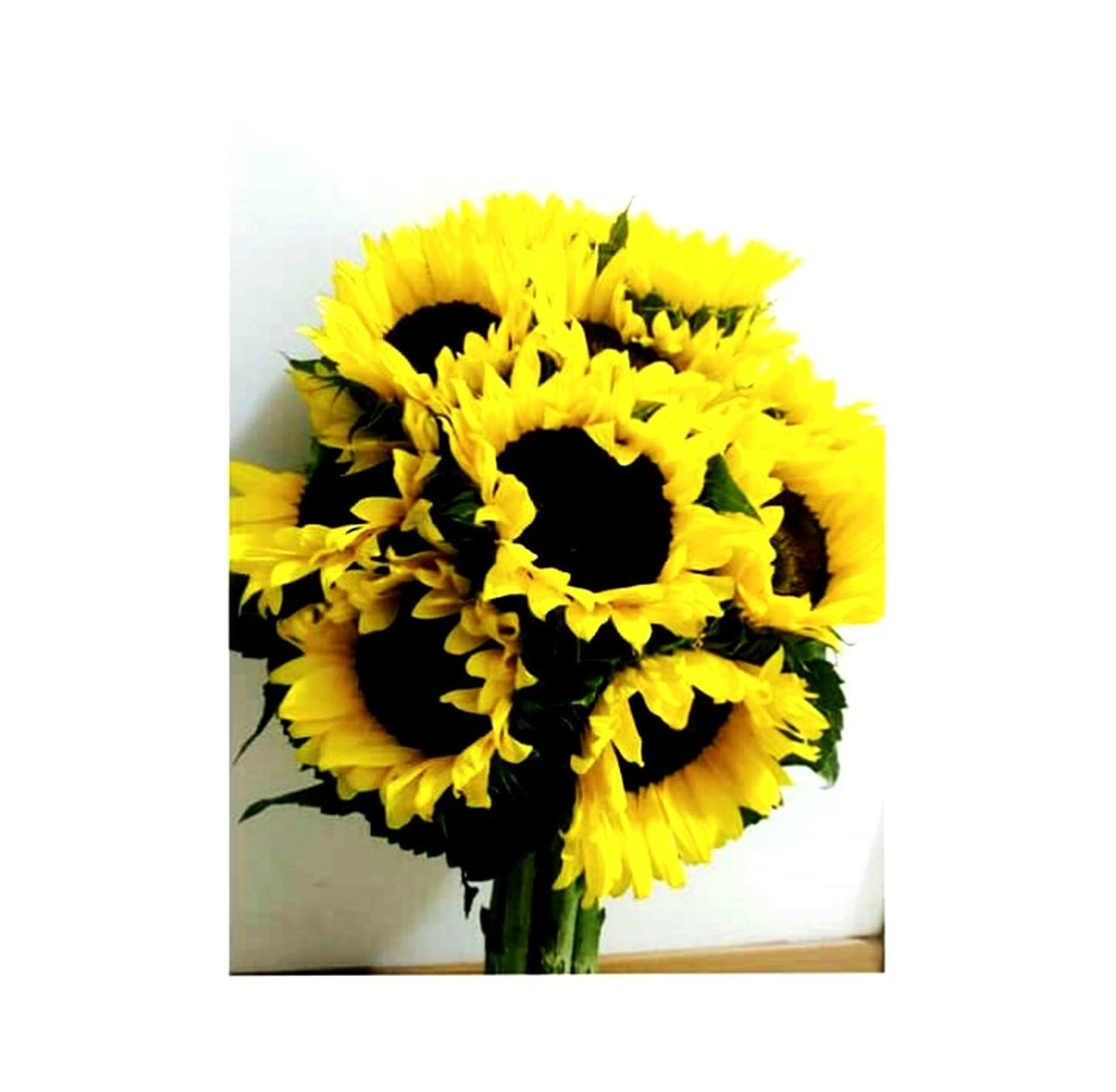 flower, yellow, petal, fragility, flower head, freshness, flower arrangement, nature, white background, beauty in nature, sunflower, no people, close-up, vase, bouquet, plant, indoors, day