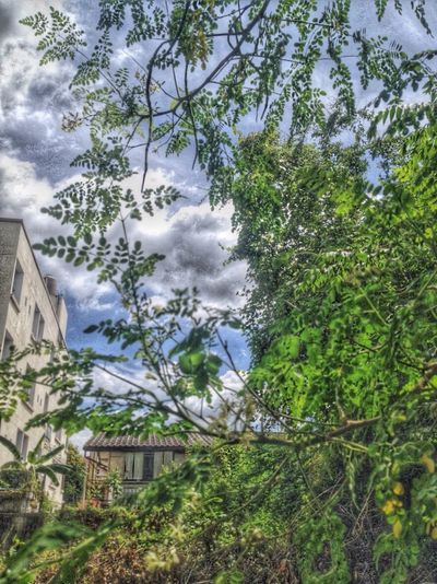 Sky Friday Tree Low Angle View House Growth Day Nature Architecture Building Exterior Outdoors Branch Plant Built Structure Sky Beauty In Nature Leaf Mountain Flower