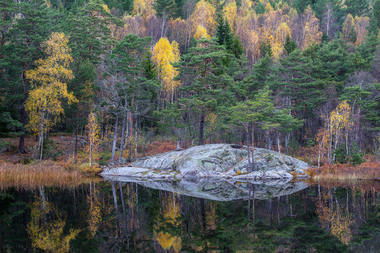 Still morning by the forest lake. Autumn Autumn Colors Autumn Leaves Beauty In Nature Calm Fall Fall Beauty Forest Lake Majestic Nature Non-urban Scene Reflection Scenics Sweden Sweden Landscape Sweden Nature Tranquility Tree Water Water Surface Waterfront Wilderness WoodLand Reflections In The Water