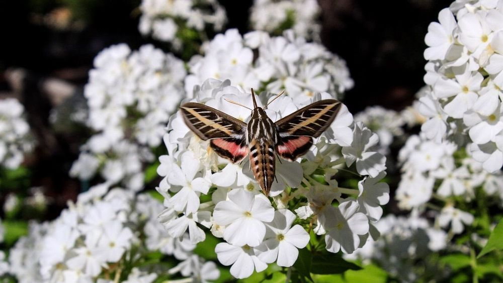 Mother of moths 😅 Animals In The Wild Fragility Beauty In Nature Insect Nature Flower Animal Themes One Animal No People The Week On EyeEm Outdoors Close-up Butterfly - Insect Earth Experience Nature Exploring Steamboat Springs Simple Things In Life