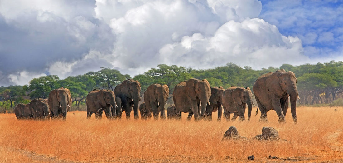 Panoramic Shot Of Elephant On Field Against Sky