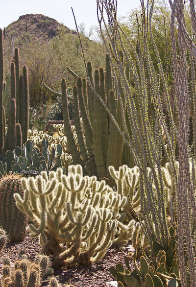 Arizona Desert Beauty In Nature Cactus Desert Botanical Garden Nature No People Plant Rural Scene Thorn