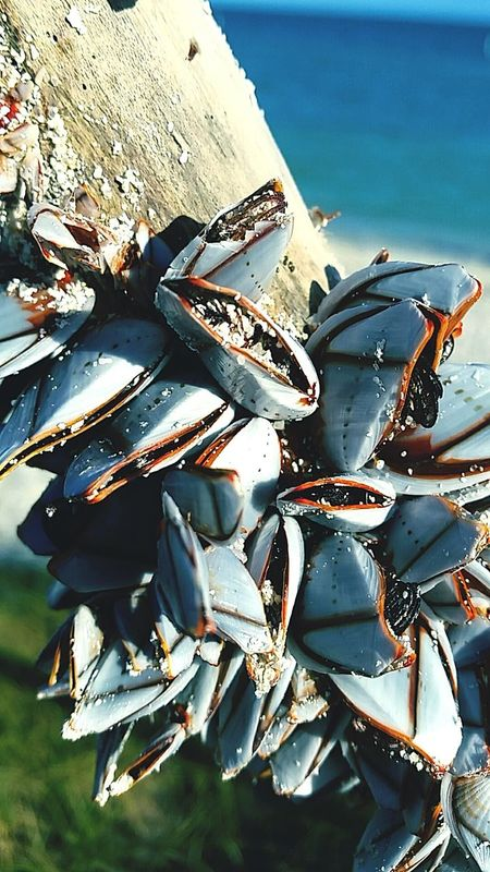 Sea Beach Water Nature Outdoors Sea Life Barnicles Drift Wood  EyeEmNewHere