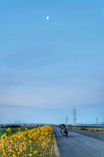 Bicycle Cycling Transportation Mode Of Transport Outdoors Beauty In Nature Nature Sky Clear Sky Moon Scenics Pedal Astronomy No People Day Flower Yellow Flower Yellow Road Roadbike 自転車 サイクリング 花 River Side Wildflower