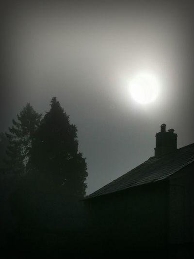 """""""The Fog"""""""