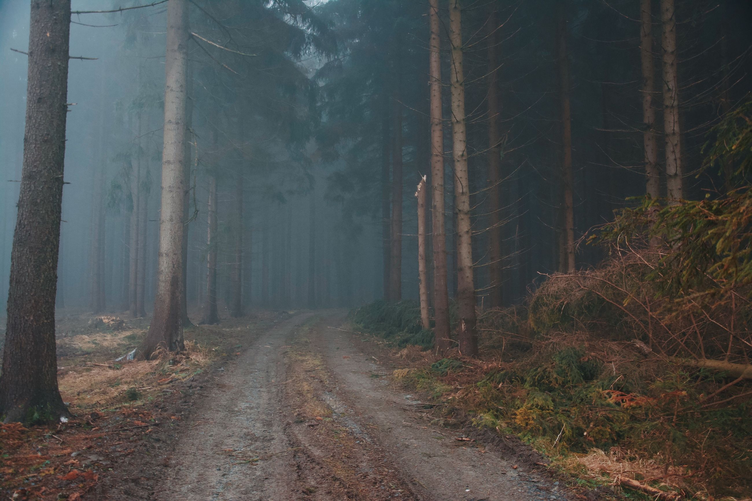 forest, tree, tree trunk, nature, no people, tranquility, outdoors, fog, scenics, landscape, beauty in nature, day