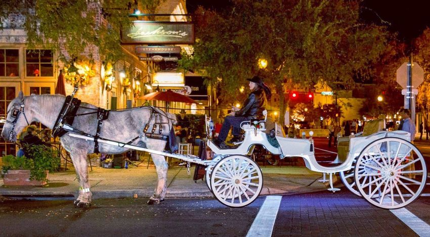 Horse Cart Transportation Carriage Night Time Horse