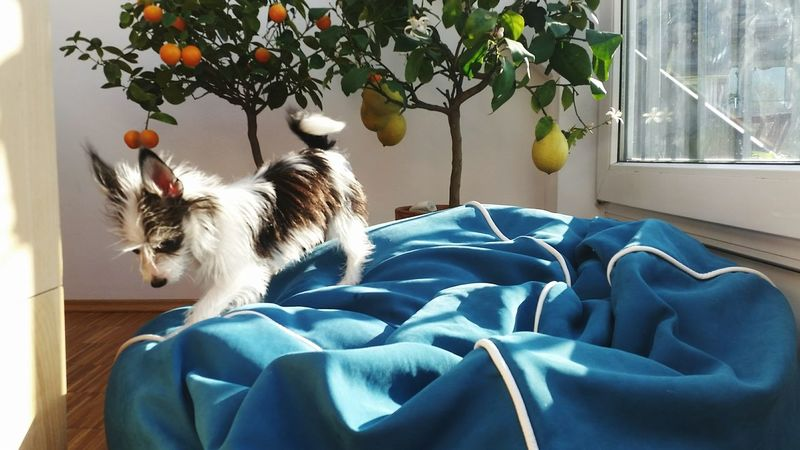 Small Dogs  Moments Light Sunlight Plants And Flowers Lemon Tree Orange Tree Simple Photography Simplicity