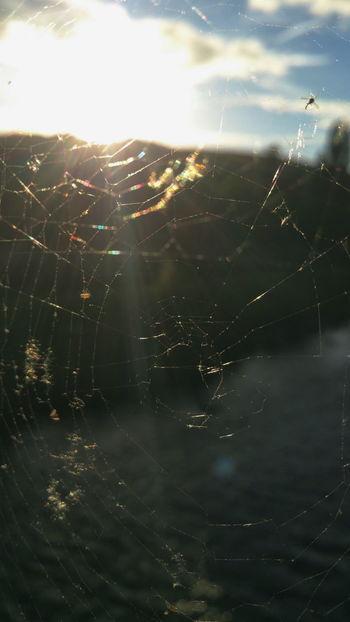 Sun - Web over River Severn ... Hafren Newtown Powys Cobweb Cobwebs Spiderweb Nature Close-up Naturaleza Bokeh Evening Shine Wales паутина паутинка солнце река вечер лето Summer Summertime