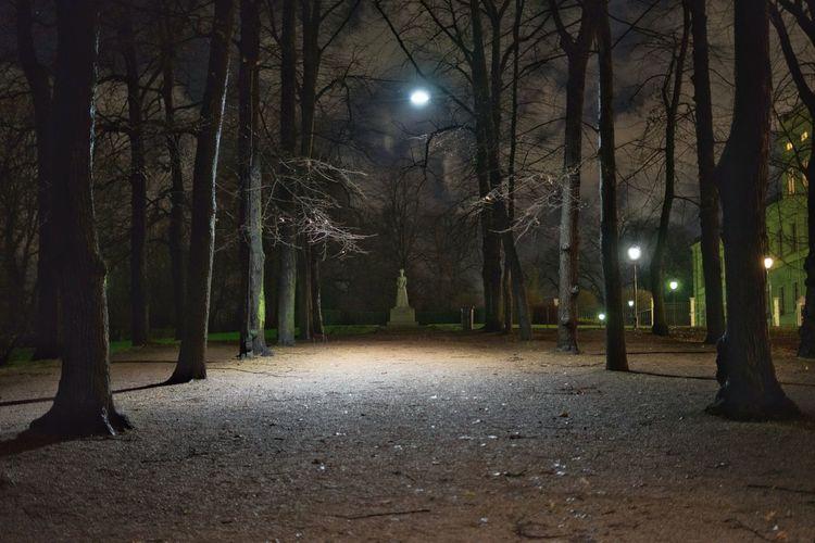 Queen Maud of Norway 🇳🇴 Slottsparken Norway Queen Night Tree Tree Trunk Illuminated Outdoors Nature No People