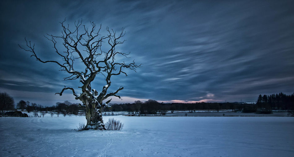 Spooky Atmosphere Spooky Trees Tree Bare Tree Beauty In Nature Branch Cold Temperature Day Landscape Lone Nature No People Outdoors Scenics Sky Snow Tranquil Scene Tranquility Tree Tree Trunk Winter