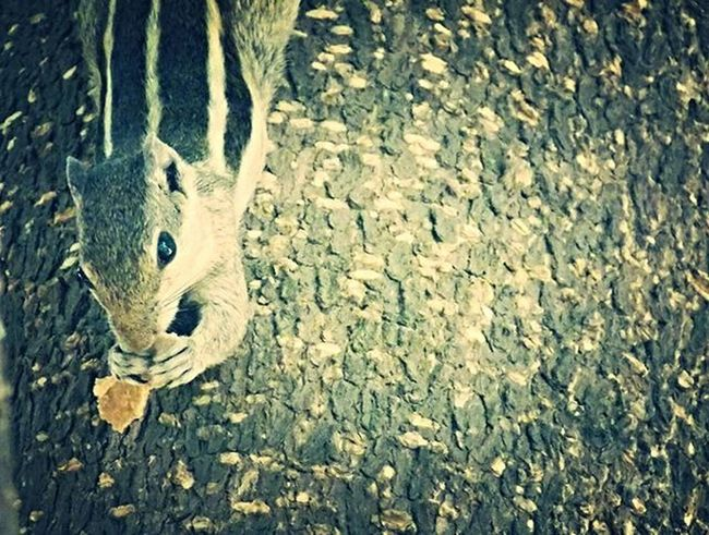 Squirrel Eating Looks Eyes Squirrelsofinstagram Earlymorning  Letmeeat Dontdisturbme Camclick MyClick Shaukbahutbadicheezhai
