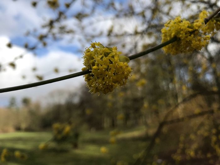 Plant Flower Flowering Plant Growth Beauty In Nature Focus On Foreground Tree Vulnerability  Fragility Yellow Freshness Nature Blossom Close-up Day Branch No People Springtime Outdoors Twig