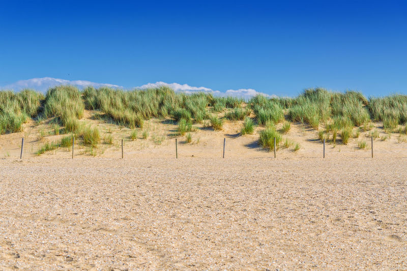 Protected landscape, dune on the beach of Holland in the background blue sky. Agriculture Arid Climate Beach Blade Of Grass Blue Clear Sky Day Desert Dune Fence Growth Holland Landscape Nature Nature Netherlands No People Outdoors Plant S Sand Color Sand Dune Scenics Sky Tree