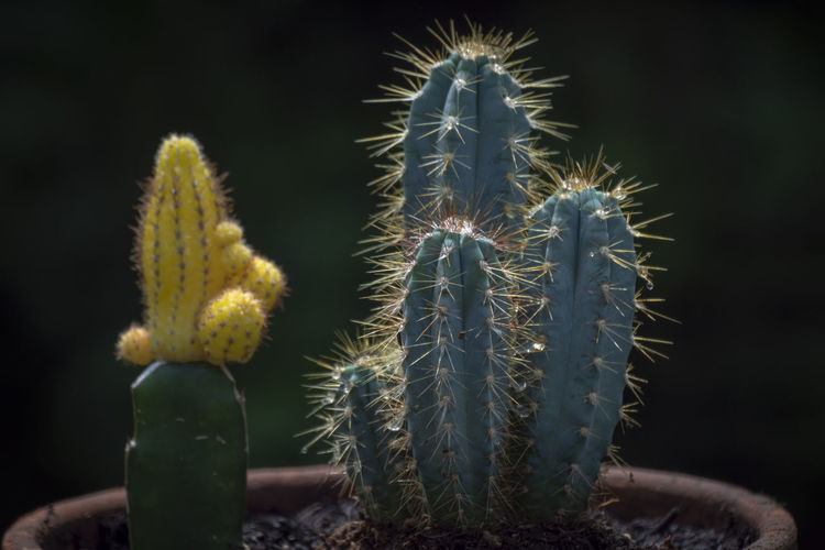 Beauty In Nature Botany Cactus Close-up Communication Day Flower Focus On Foreground Green Color Growth Nature No People Outdoors Plant Potted Plant Sharp Sign Spiked Spiky Succulent Plant Thorn