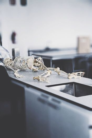 Skeleton On Table In Laboratory