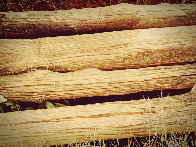 wooden log Wood Forest Path Forest National Park Parellel Fresh Colors Wildlife & Nature Nature True Trust Strong Brown Beautiful Creation Expression Relaxing Horticulture Original Art Pivotal Ideas Beauty In Nature Natural Nature_collection Home