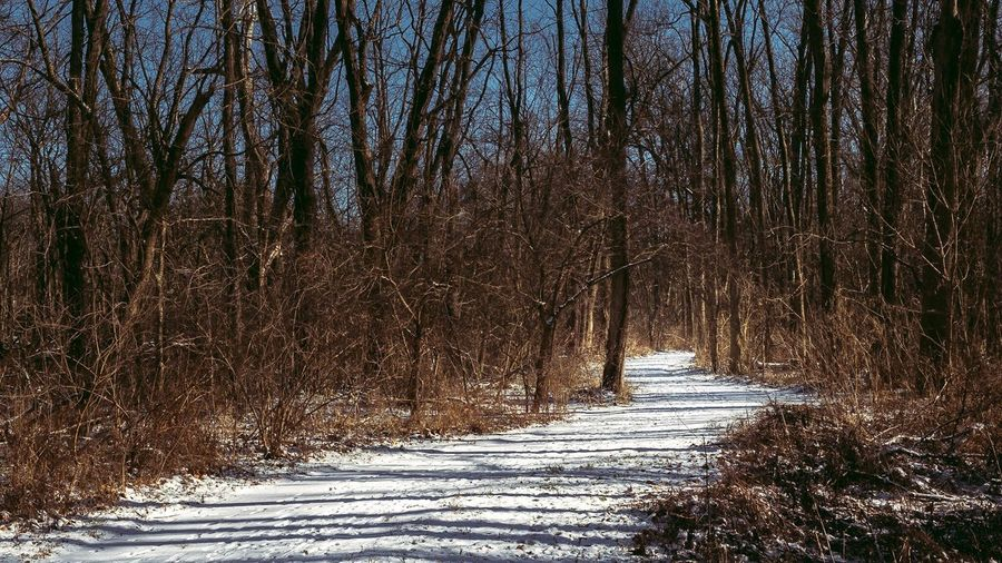 Arbuckle Park Winter Snow Bare Tree Cold Temperature Forest Nature WoodLand Landscape Tree Day