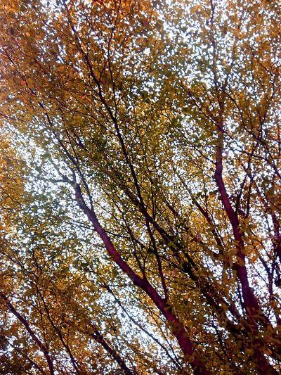 Tree Nature Tree Photography Nature Photography Tree_collection  Nature Collection Low Angle Shot Tree Art Colorful Tree Tree Colors Nature Color Tree View Colorful Nature Creative Color On Leaves Color Of Nature Yellow Tones Yellow Tree