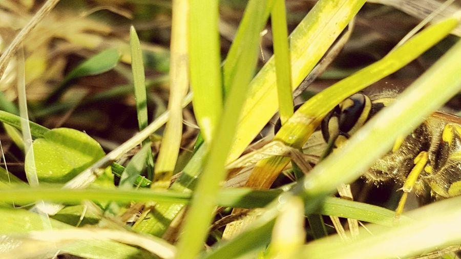 Wasp Naturalplace