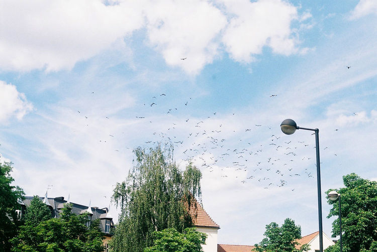 35mm Film City Sky No People Blue Day Analogue Photography 50mm F1.8 Birds