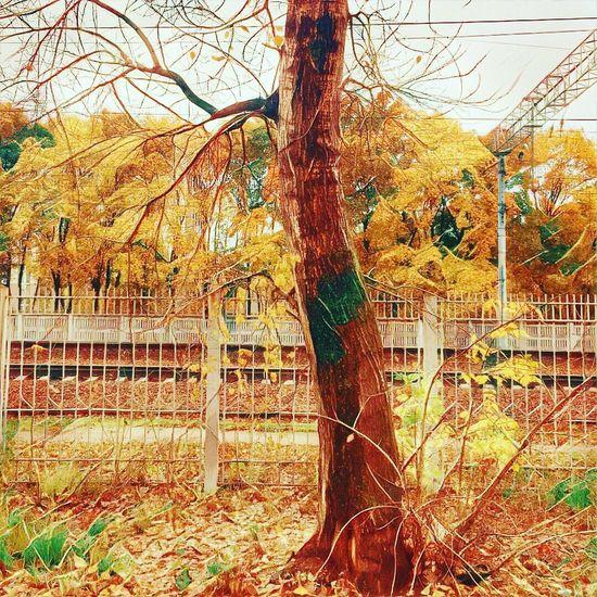 Tranquility Золотая осень Moscow Golden Autumn Nature Autumn Tadaa Community Tree Prisma