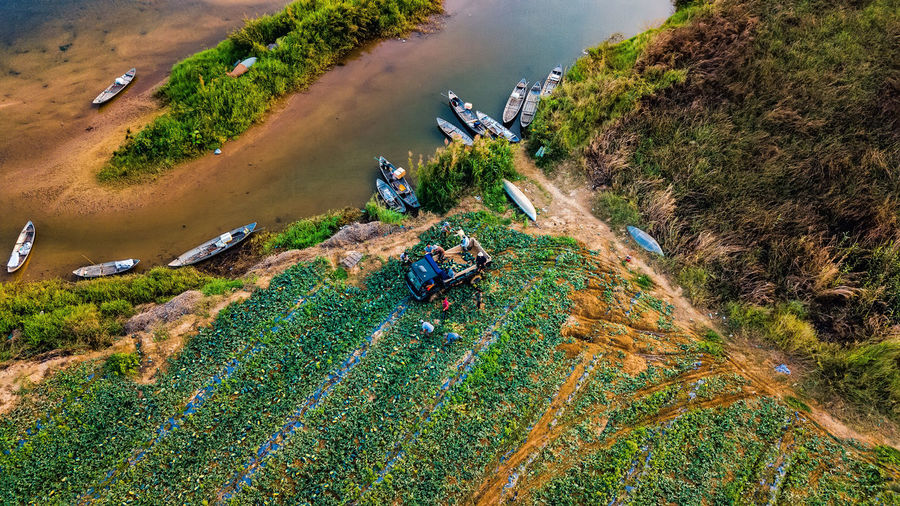 Harvest melon Green Color River Vietnam Duysinh Sumer Island Water Agriculture Rural Scene Field Tree High Angle View Backgrounds Aerial View Multi Colored Landscape