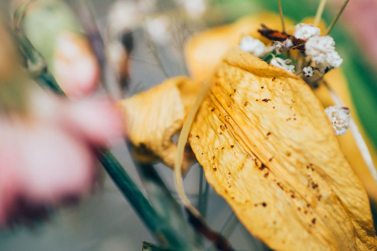 Close-Up Of Dry Flower Petals