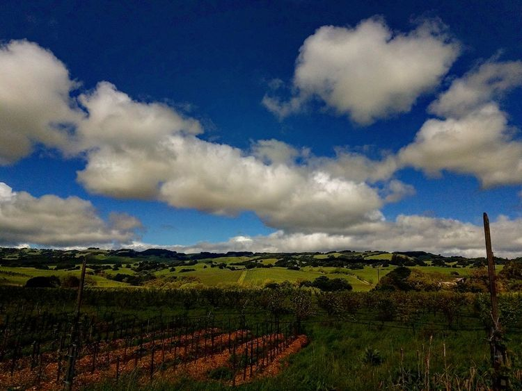Cloud - Sky Sky Agriculture Landscape Field Rural Scene Nature No People Beauty In Nature Outdoors Scenics Growth Day Tree Hills, Mountains, Sky, Clouds, Sun, River, Limpid, Blue, Earth Hillside Hills Hills And Valleys Vineyards  Blue Clouds And Sky Clouds Cloud Beauty In Nature Vineyard