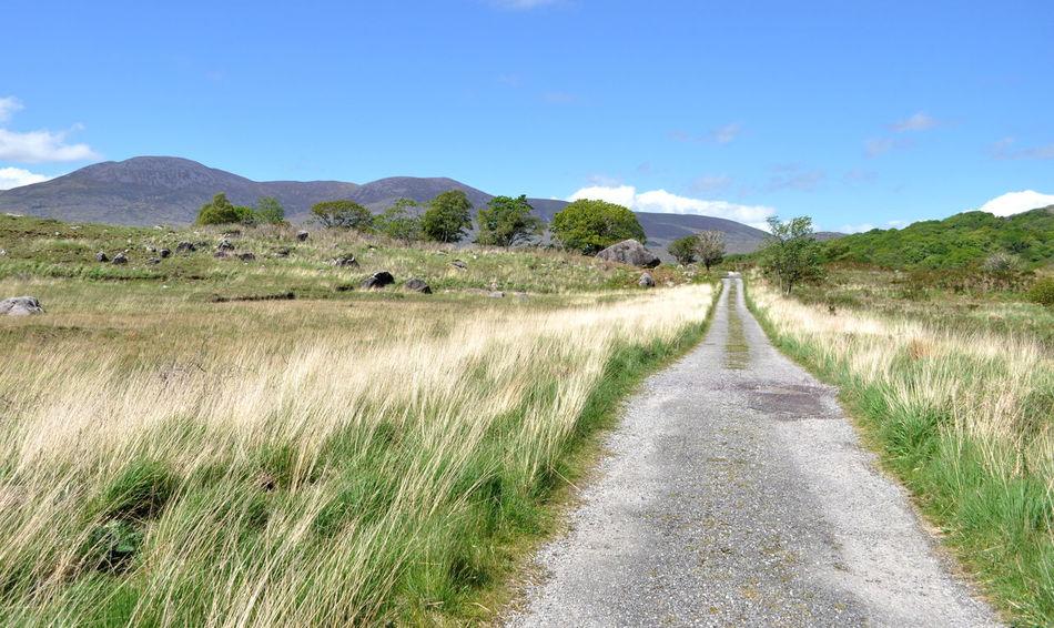Trail in Killarney National Park Irish Landscape Killarney  Killarney Ireland Killarney National Park Beauty In Nature Day Grass Landscape Scenics Tranquil Scene