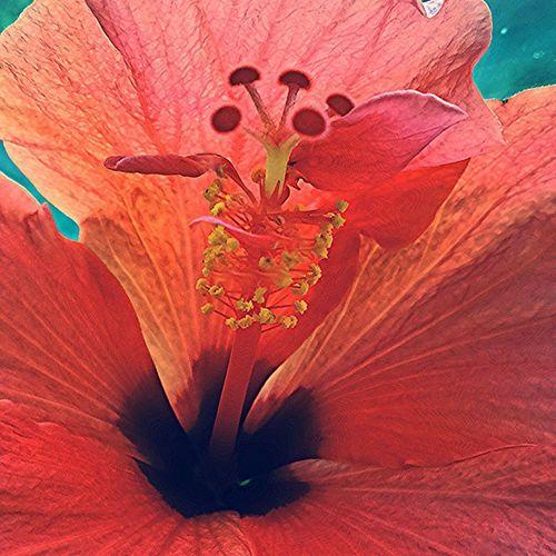Все-тки, летом цветение домашних цветов не сильно замечается, ведь на улице все многопестроароматно . Но зимой,когда за окном глубоко минусовой пипец, домашние цветы согревают, дарят надежду на то, что лето не скоро, но наступит