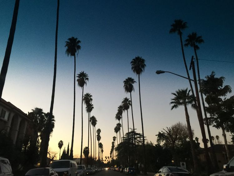 It's Cold Outside Winter Wintertime Glendale Losangeles California SoCal Sunset Sunsetmadness Sunset Silhouettes Sunset_collection