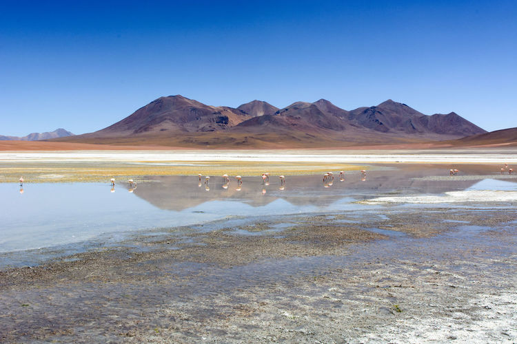Flamingo Arid Climate Beauty In Nature Blue Clear Sky Climate Copy Space Environment Lagoon Lake Landscape Mineral Mountain Mountain Range Nature No People Non-urban Scene Reflection Salt Flat Scenics - Nature Sky Tranquil Scene Tranquility Water